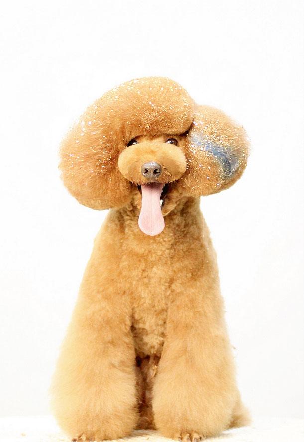 宠物美容师培训学校告诉你:如何做一名合格的宠物美容师