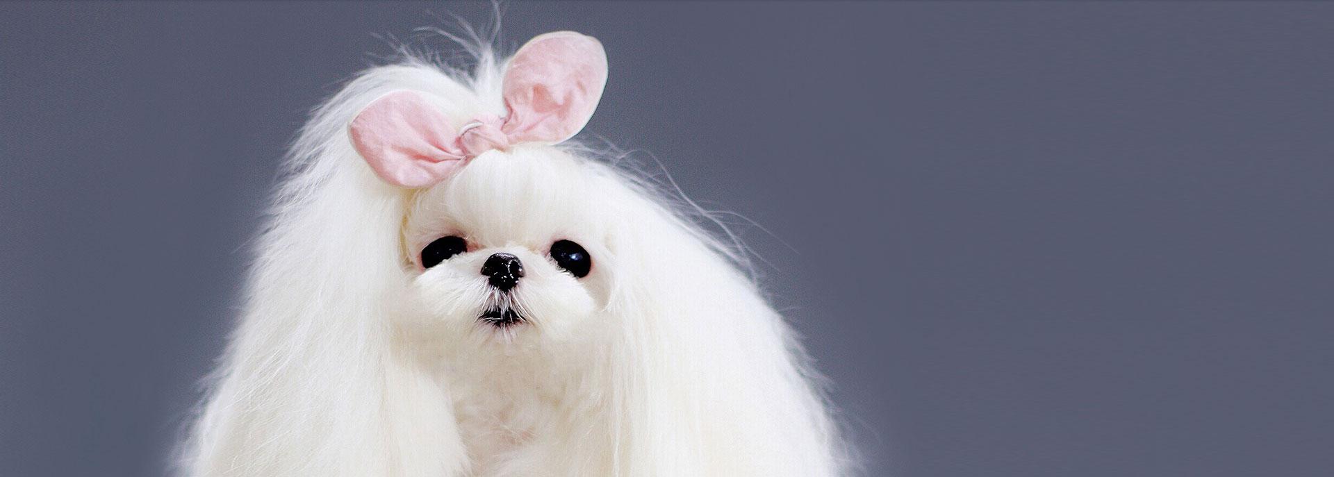 宠物美容学校告诉你:现在的宠物美容行业发展好吗