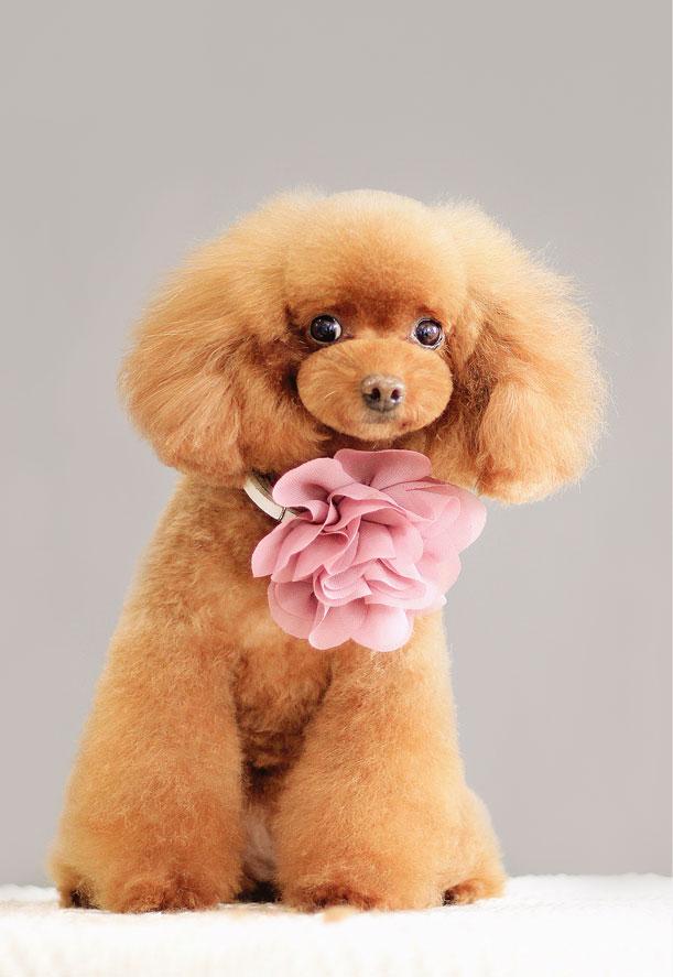 宠物美容学校告诉你:宠物美容师的美容心得