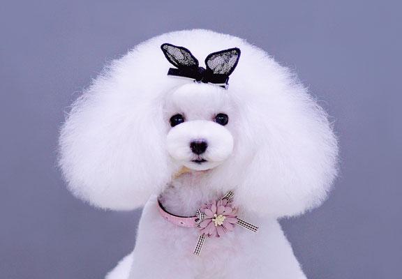宠物美容师培训学校告诉你:宠物美容的基本步骤