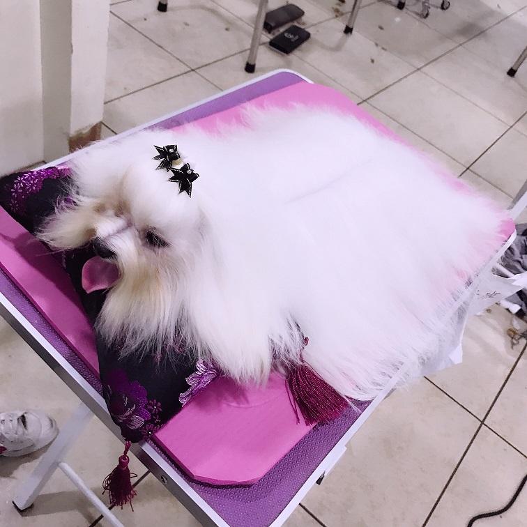 宠物美容培训学校告诉你:宠物美容师的职业发展是怎么样的?