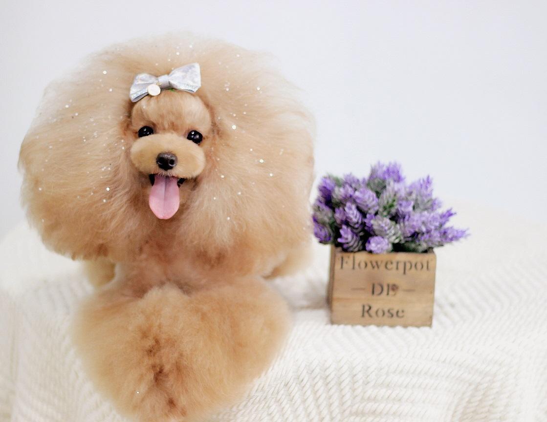 宠物美容师培训:男生学宠物美容有什么优势