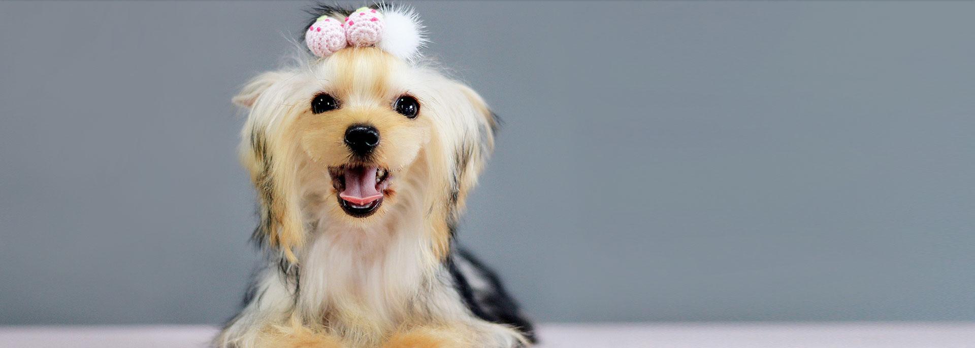 宠物美容培训常用的美容工具