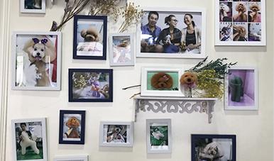 深圳宠物美容培训学校告诉你:宠物美容的步骤
