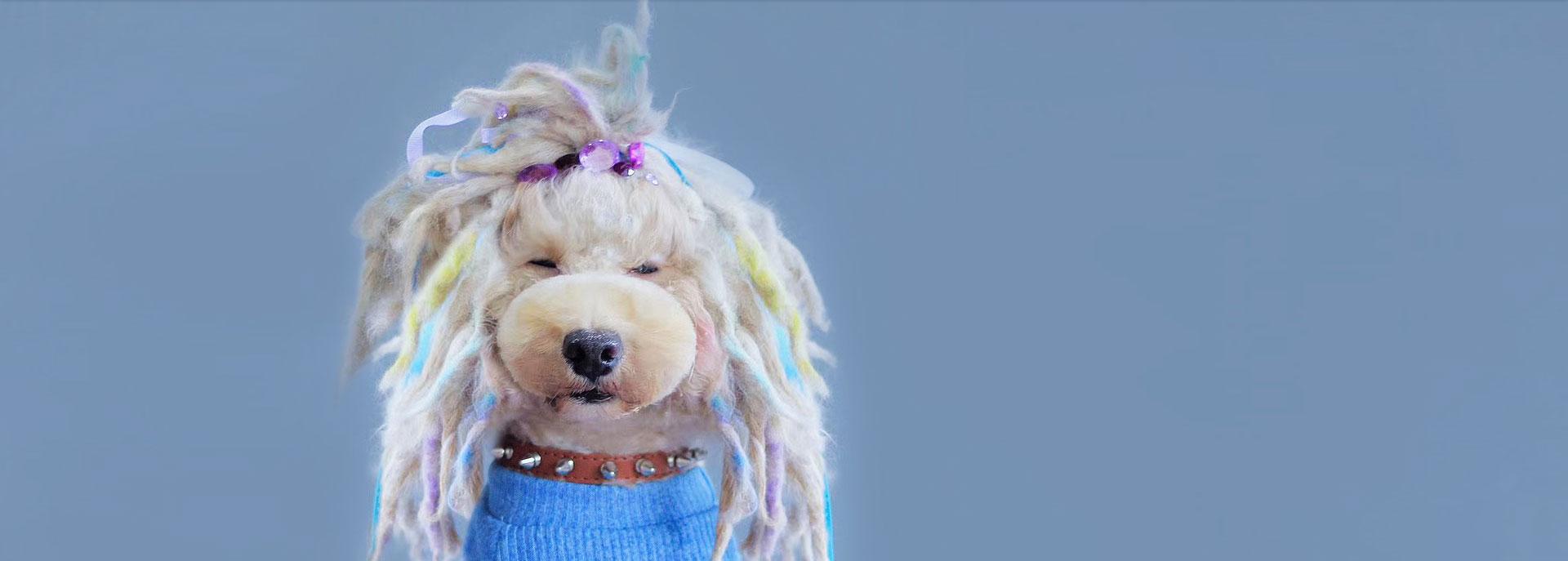 宠物美容学校告诉你:如何解决狗狗掉毛的问题